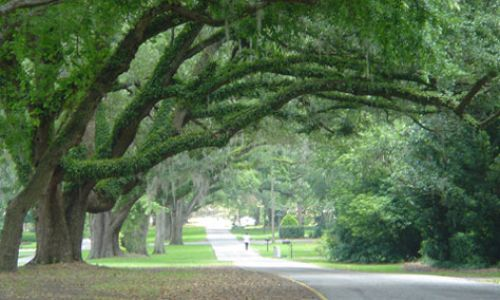 Ocala historic tree lined street (1)