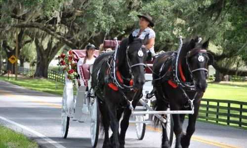 ocala horse buggy ride
